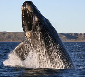 Japanese Whales Making a Splash in the Alternative Investment Industry